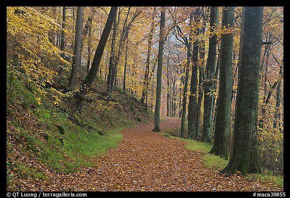 Trail_in_the_Fall.jpeg